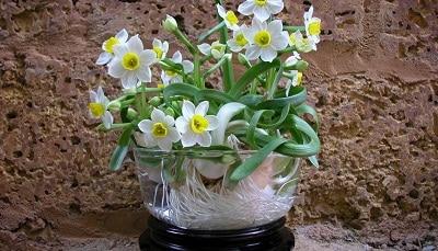 Hoa Thủy Tiên một trong những loại hoa thích hợp để làm quà tết