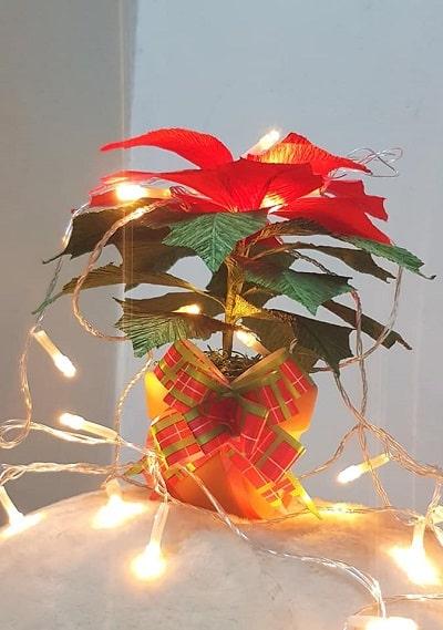 Decoration Noel - Hoa trạng nguyên: Decor Noel giá chỉ 69k tại LâmThụ