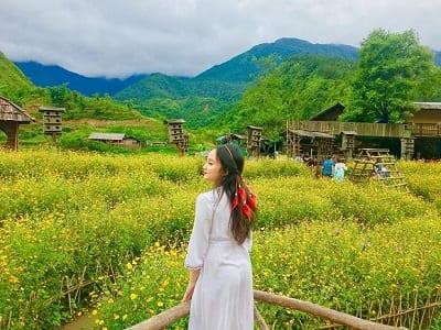Check in bên cánh đồng hoa vàng rực rỡ.