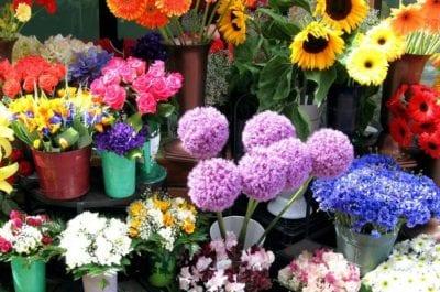 Shop Hana Flower