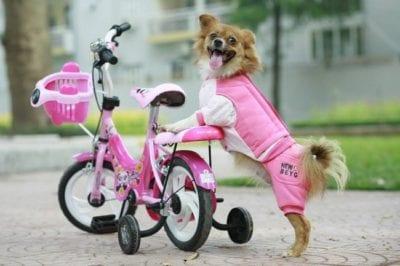 PET Sài Gòn là Top 10 Shop bán phụ kiện cho thú cưng uy tín ở TPHCM