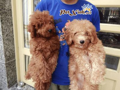 PET Xinh là một trong những cửa hàng chuyên bán phụ kiện cho thú cưng nổi tiếng tại khu vực quận Gò Vấp