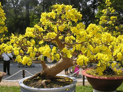 Hoa và cây cảnh cho ngày Tết